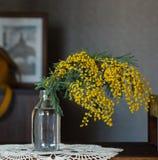Мимоза цветков весны желтая Стоковые Изображения RF