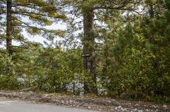 Мимолётный взгляд пруда Abol в парке штата Baxter стоковое фото rf