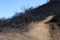 Миндальные деревья после огня стоковое фото