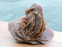 Минерал розы пустыни Стоковые Фотографии RF