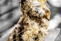Минерал Aragonite меденосный Стоковая Фотография RF