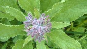Миниатюрная верхняя часть цветка вниз осматривает Стоковые Фото