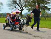 Миниатюрная лошадь вытягивая тележку вполне детей Стоковая Фотография RF