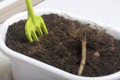 Миниатюрные инструменты для floriculture Малые вилки для культивировать землю в цветочных горшках Стоковое Изображение