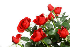 миниатюрные красные розы стоковые изображения rf