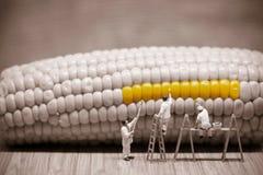 Миниатюрные художники крася стержень кукурузного початка Фото макроса Стоковые Фотографии RF