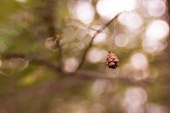 Миниатюрный конус сосны Стоковые Фото