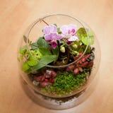 Миниая орхидея и другие заводы дома стоковые изображения
