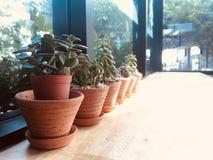 Минимальный небольшой бак кактуса в кафе кофе стоковые изображения rf