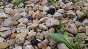Минимальная предпосылка камней Стоковое Изображение