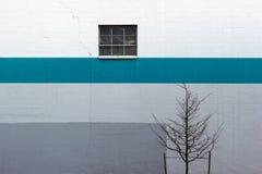 Минимальный с голубой нашивкой, деревом и окном Стоковые Фотографии RF