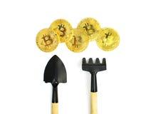 Минирование Bitcoin, золотые bitcoins в руке Символ цифров новой виртуальной валюты на предпосылке изолята Стоковая Фотография