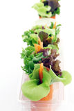 миниый салат Стоковые Изображения
