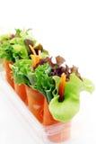 миниый салат Стоковое Изображение RF