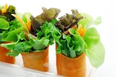 миниый салат Стоковое Фото