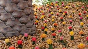 Мини кактус цвета Стоковые Фото