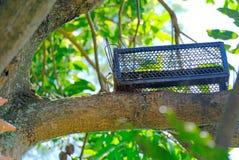Мини ловушка коробки для крысы или белки на дереве Стоковые Фотографии RF