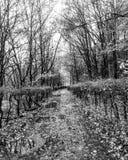 Мини первая прогулка Стоковые Изображения