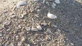 Мини песчанная дюна раковины моря Стоковая Фотография