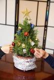 Мини рождественская елка Розмари будучи украшанным с орнаментами звезды золота в студии с звездой золота стоковые фото
