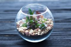 Мини сад в стеклянной вазе на деревянной предпосылке Стоковые Фото
