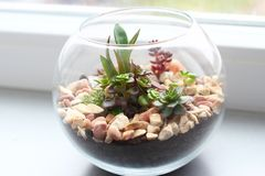 Мини сад в стеклянной вазе Стоковое фото RF