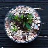 Мини сад в стеклянной вазе Стоковое Фото