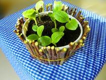 Мини-сад Стоковые Изображения RF