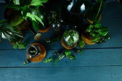 Мини стеклянные вазы и бутылка с зелеными листьями, заводами Стоковая Фотография RF