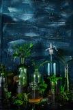 Мини стеклянные вазы и бутылка с зелеными листьями, заводами Садоводство Стоковое фото RF
