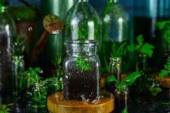 Мини стеклянные вазы и бутылка с зелеными листьями, заводами Садоводство Стоковые Фото