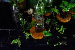 Мини стеклянные вазы и бутылка с зелеными листьями, заводами Садоводство Стоковые Фотографии RF