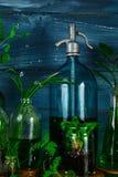 Мини стеклянные вазы и бутылка с зелеными листьями, заводами Садоводство Стоковые Изображения RF