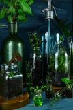 Мини стеклянные вазы и бутылка с зелеными листьями, заводами Стоковая Фотография