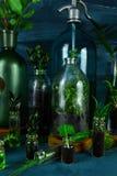 Мини стеклянные вазы и бутылка с зелеными листьями, заводами Стоковое фото RF
