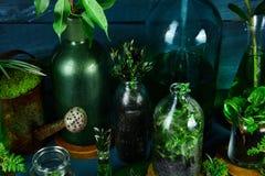 Мини стеклянные вазы и бутылка с зелеными листьями, заводами Стоковые Изображения