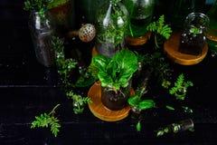 Мини стеклянные вазы и бутылка с зелеными листьями, заводами Садоводство Стоковая Фотография RF