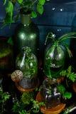 Мини стеклянные вазы и бутылка с зелеными листьями, заводами Садоводство Стоковые Изображения
