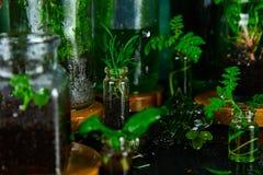 Мини стеклянные вазы и бутылка с зелеными листьями, заводами Садоводство Стоковое Фото