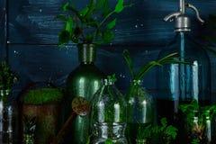 Мини стеклянные вазы и бутылка с зелеными листьями, заводами Садоводство Стоковое Изображение RF