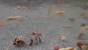 Мини торнадо с листьями акции видеоматериалы
