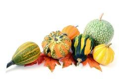 Мини тыквы на изолированной белой предпосылке halloween Стоковые Изображения RF
