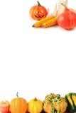 Мини тыквы на изолированной белой предпосылке halloween Стоковая Фотография