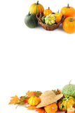 Мини тыквы на изолированной белой предпосылке halloween Стоковое Изображение