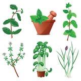 Миномет и пестик при зеленые установленные травы Стоковое фото RF