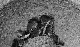 Миномет и пестик содержа высушенные лепестки розы Стоковое Фото