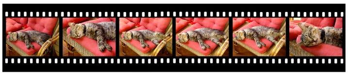 минута s жизни кота стоковое изображение rf