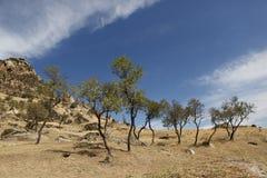 Миндальные деревья под башнями Marko Стоковая Фотография