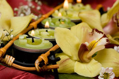 миражирует желтый цвет орхидей Стоковое Изображение
