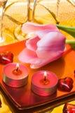 миражирует тюльпан Стоковое Изображение